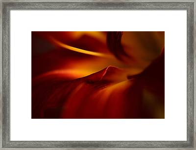 Abstract Floral Framed Print by Floyd Menezes