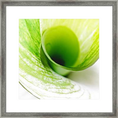 Framed Print featuring the photograph Abstract Green Wite Flowers Macro Photography Art Work Square by Artecco Fine Art Photography