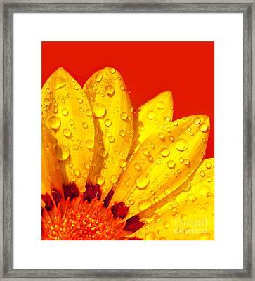 Abstract Flower Petals Framed Print