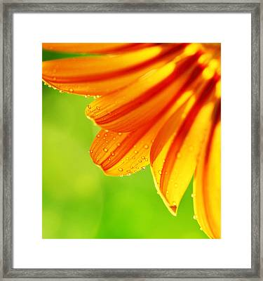 Abstract Flower Petals Colorful Floral Border Framed Print by Anna Omelchenko