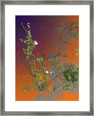 Abstract Flowers Of Light Series #13 Framed Print