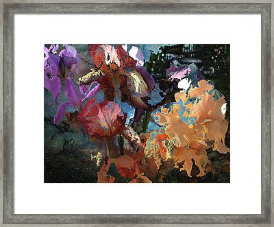 Abstract Flowers Of Light Series #15 Framed Print