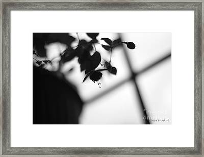 Abstract Flowers Framed Print by Todd A Blanchard