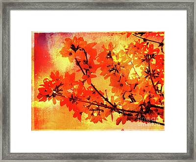 Abstract Forsythia Flowers Framed Print