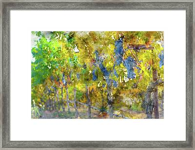 Abstract Grapes On The Vine Framed Print by Brandon Bourdages