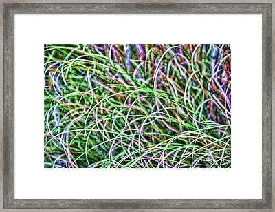 Abstract Grass Framed Print by Roberta Byram