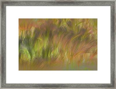 Abstract Grasses Framed Print by Ronald Hoggard