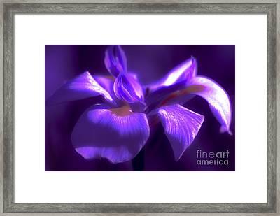 Abstract Iris Framed Print by Karen Lewis