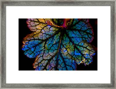 Abstract Leaf Framed Print