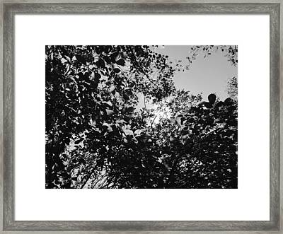 Framed Print featuring the photograph Abstract Leaves Sun Sky by Chriss Pagani