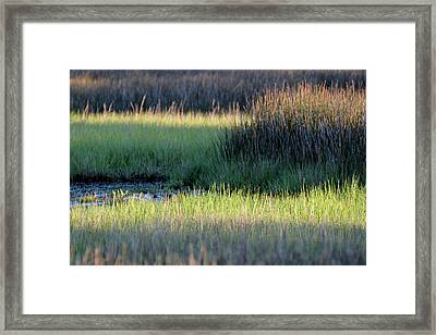 Framed Print featuring the photograph Abstract Marsh Grasses by Bruce Gourley