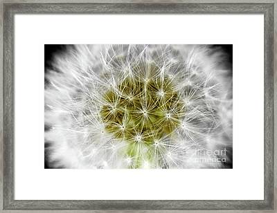 Abstract Nature Dandelion Floral Maro White And Yellow A1 Framed Print