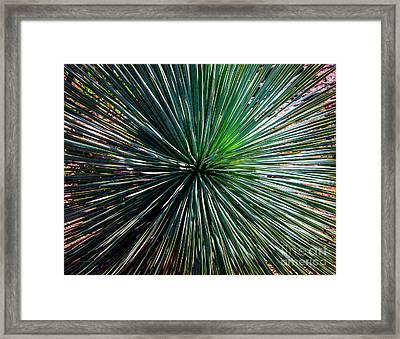 Abstract Nature Desert Cactus Photo 207 Blue Green Framed Print