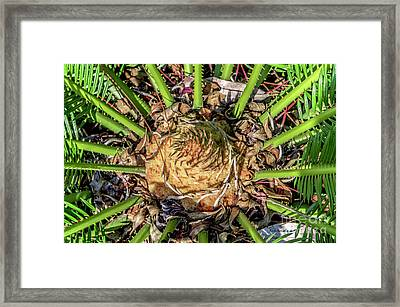 Abstract Nature Tropical Fern 2096 Framed Print