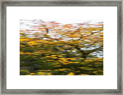 Abstract Of Maple Tree Framed Print