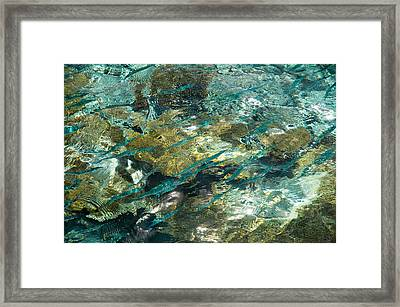 Abstract Of The Underwater World. Production By Nature Framed Print