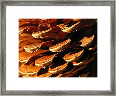 Abstract Pine Cone Framed Print by Juergen Roth