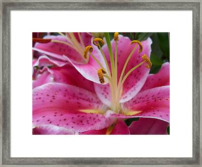 Abstract Pink Lily1 Framed Print