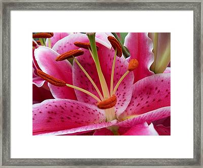 Abstract Pink Lily2 Framed Print
