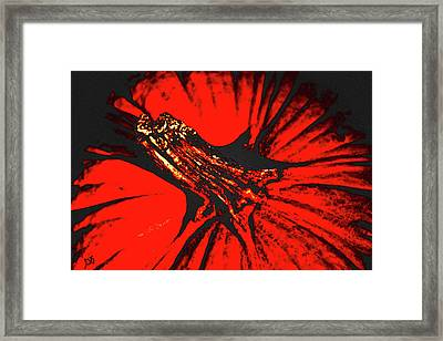 Abstract Pumpkin Stem Framed Print
