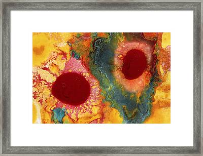 Abstract Red Flower Garden 1 Framed Print by Amy Vangsgard