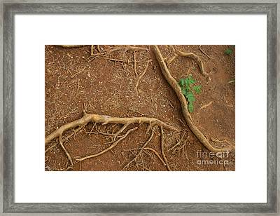 Abstract Roots Framed Print