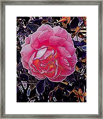 Abstract Rose 11 Framed Print