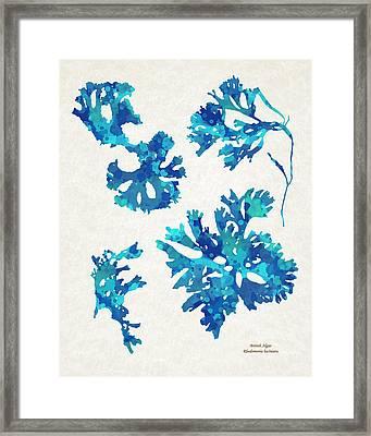 Abstract Seaweed Art Rhodomenia Laciniata Framed Print by Christina Rollo
