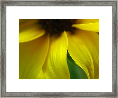 Abstract Sunflower Framed Print by Juergen Roth