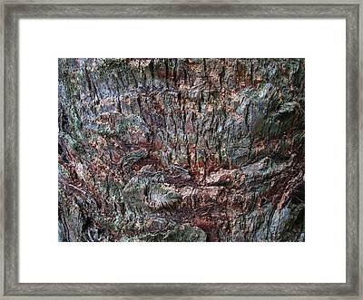 Abstract Tree Bark Framed Print by Juergen Roth