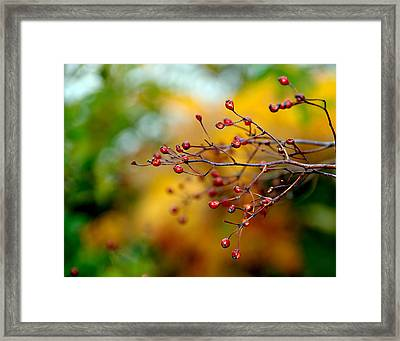Abstract Tree Branch Framed Print by JoAnn Lense
