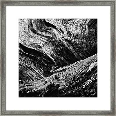 Abstract Tree Lll - Black And White Framed Print