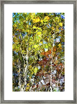 Abstract Tree Reflection Framed Print by Christina Rollo