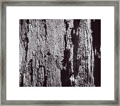 Abstract Treebark Framed Print