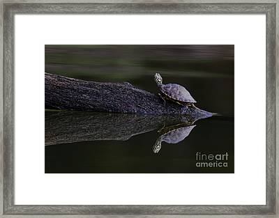 Framed Print featuring the photograph Abstract Turtle by Douglas Stucky