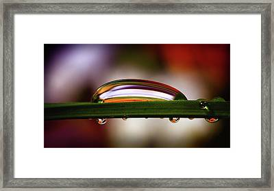 Nature's Abstract Framed Print by Gary Yost