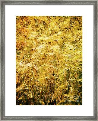 Abstract Wheat Framed Print by Silvia Ganora