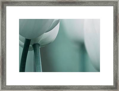 Abstract Blue White Flowers Photography Online Art Print Shop Framed Print by Artecco Fine Art Photography