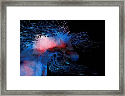 Abstract Wild Horse Red White And Blue Framed Print by Michelle Wrighton