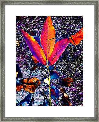 Abstracted Fall Leaves Framed Print by Beth Akerman