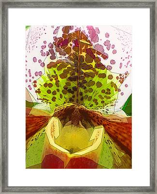 Abstracted Orchid Framed Print by Jeff Burgess
