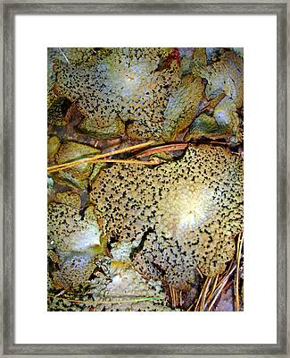 Framed Print featuring the photograph Abstraction In Lichen by Lynda Lehmann