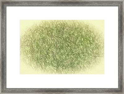 Abstractions From Nature - Pine Needles Framed Print