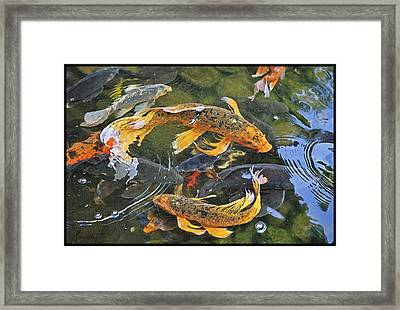 Abundance Framed Print by Ron Morecraft