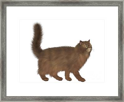 Abyssinian Cat Framed Print by Corey Ford