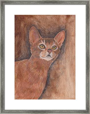 Abyssinian Cat Framed Print by Nicole Grattan