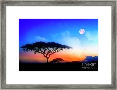 Acacia Sunset Framed Print