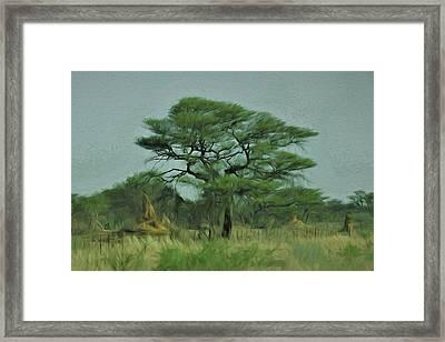 Acacia Tree And Termite Hills Framed Print by Ernie Echols
