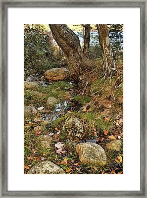 Acadia Fall Foliage Framed Print by Alexander Mendoza