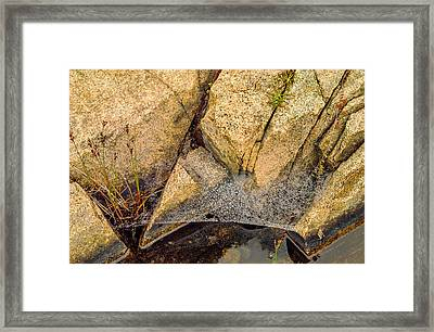 Acadia Granite With Spiderweb And Grasshopper Photo Framed Print by Peter J Sucy